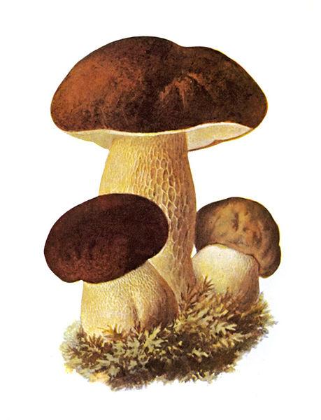 O que ajuda a curar um fungo de pregos